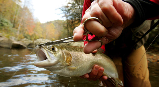 Trout Anglers Should Take Precautions after Discovery of Nuisance Algae