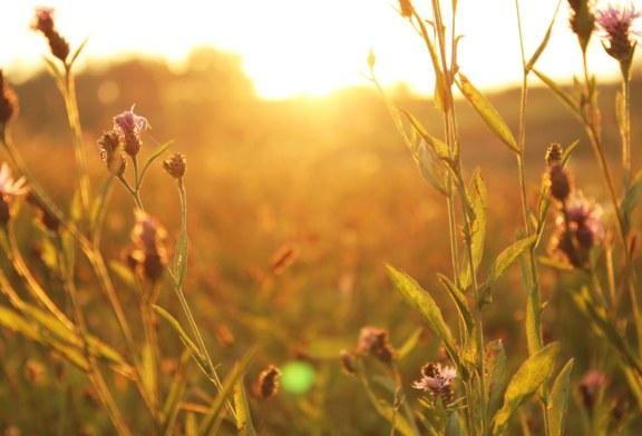 Troxler announces availability of farmland preservation grants; application deadline is Dec. 16