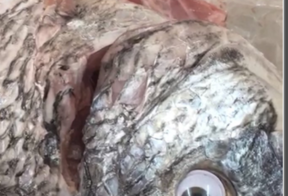 Stupid Photo: A Grocery Store Stuck Googly Eyes on Old Fish to Make Them Look Fresher