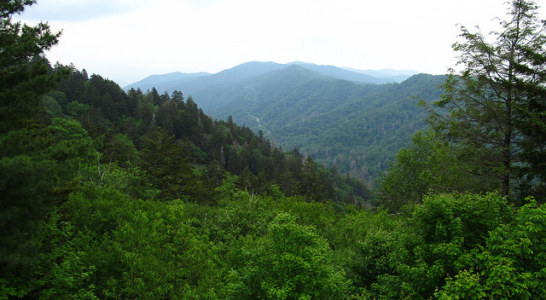 NC Land Conservancies Unify to Fight Climate Change